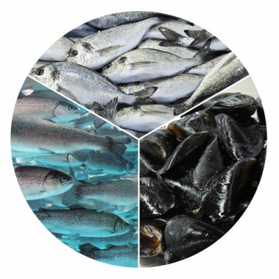 Funding of production and marketing plans, as well as marketing measures for fishery and aquaculture products